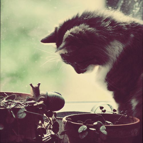 Kitty and Snail. By Au fil De. #photography #cat