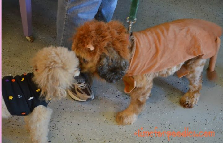 Time For Poodles And Friends: Making The Scene At Bow Wow Ween