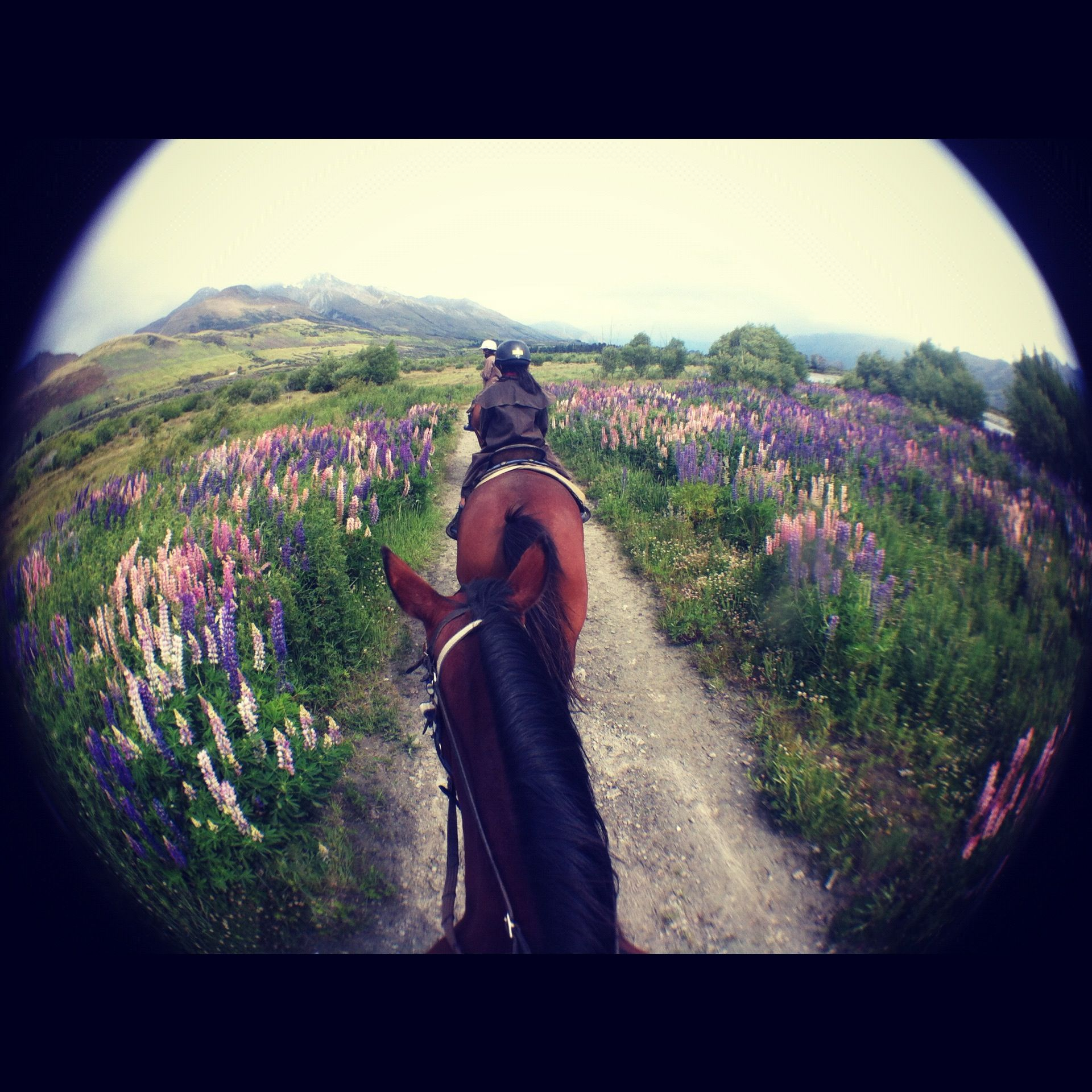 Horse Riding in Glenorchy, New Zealand