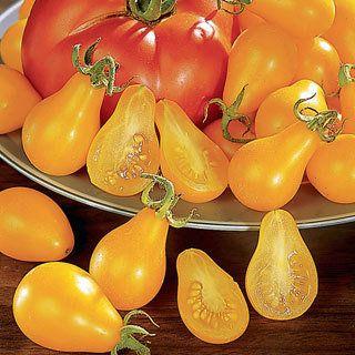 Grafted tomato yellow pear. awsome.