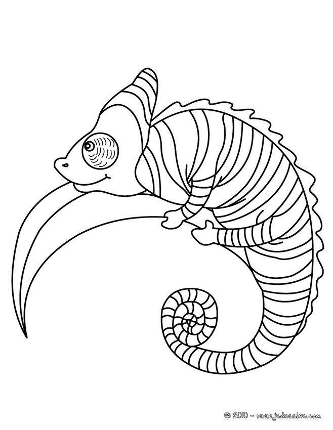 coloriage d'un joli caméléon sur une branche. parfait pour