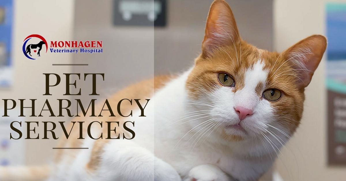 Monhagen Vet animal hospital Middletown, offers the best