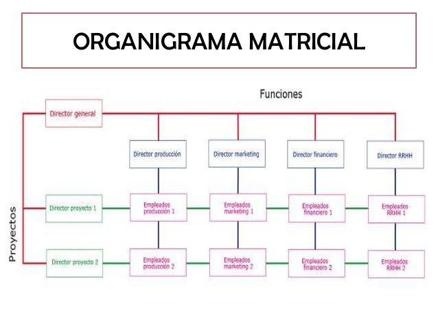 Ejemplo De Organigrama Matricial Organigrama Docencia
