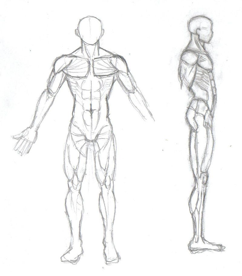 Human body sketch by mmawolf | Sketches and Anatomy | Pinterest ...