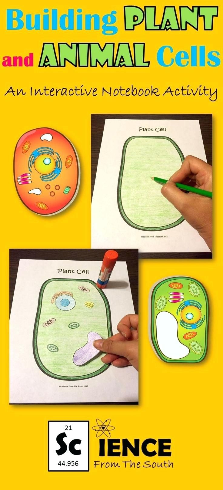 Animal Cell Diagram 6th Grade