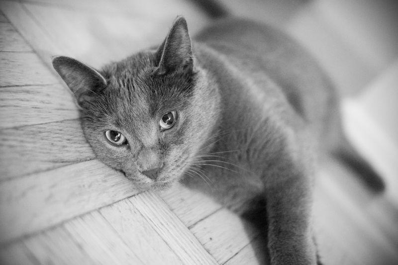 My cat by MadGuru on DeviantArt