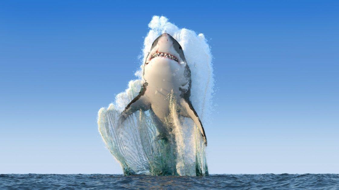 3 Requins 3 Sharks Voyage Onirique En 2020 Requin Blanc Grand Requin Blanc Photographie