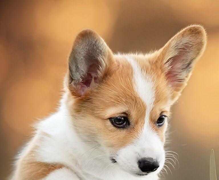 Cute Baby Dog Wallpaper Download