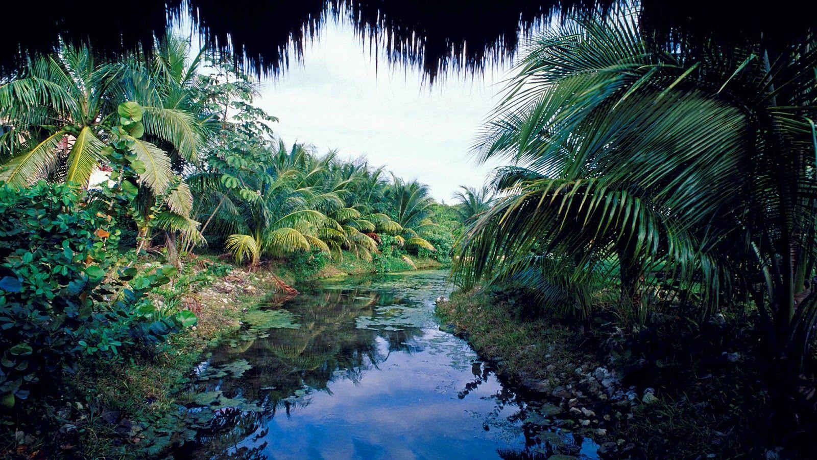 Tapety na pulpit dżungla, rzeka, palmy, amazonka