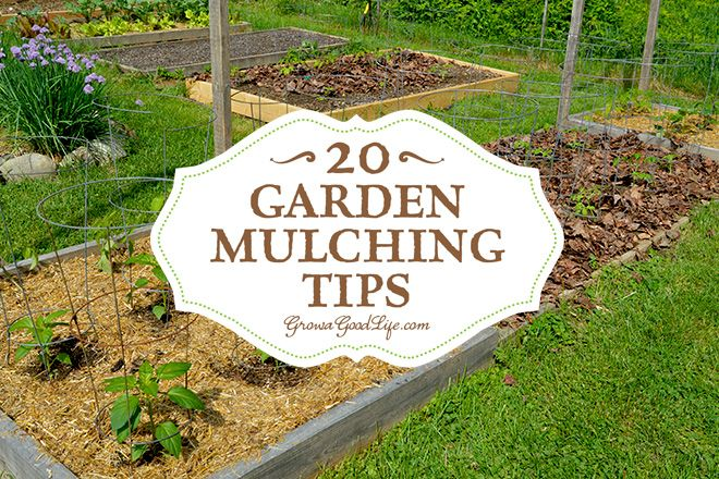 Elegant Mulching Is One Of The Best Things You Can Do For Your Garden. Learn All  About Mulching Your Garden Beds With Tips From 20 Seasoned Gardeners