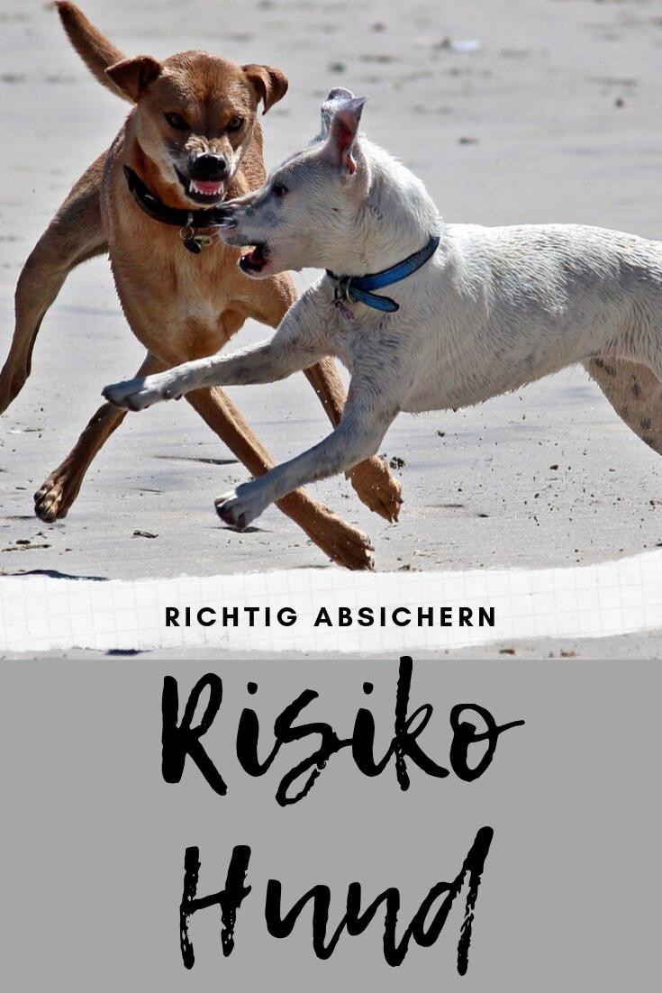 Das Risiko Hund Richtig Absichern Mit Bildern Hunde Hunde Erziehen Hundehaltung