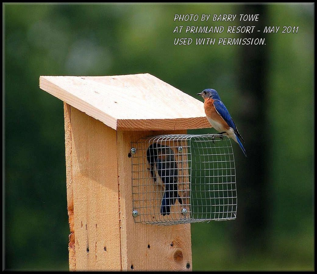 Good entrance. buildabirdhouse Bird house plans, Bird