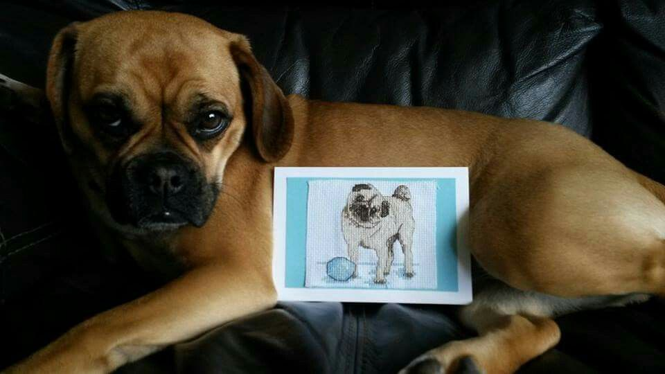 Kit Puggle Dog Cross Stitch Chart