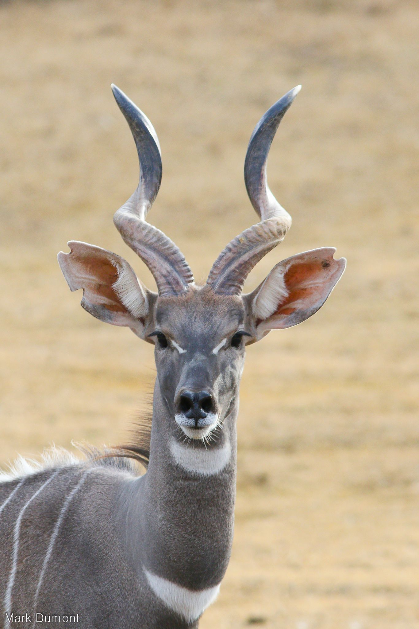 which animal has single horn?   Yahoo Answers
