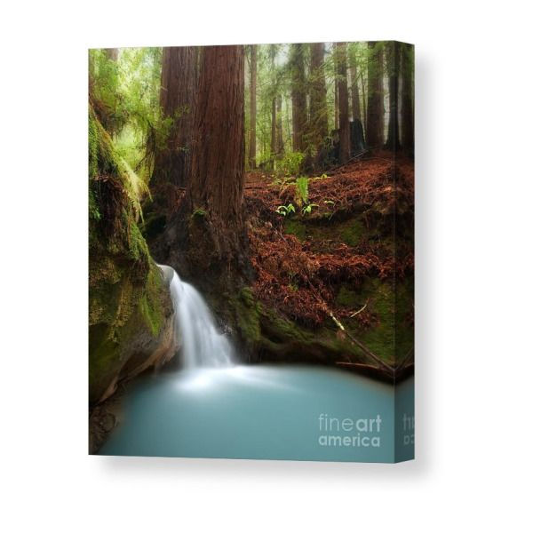 b849de03a Redwood Forest Waterfall Canvas Print | Products | Forest waterfall ...