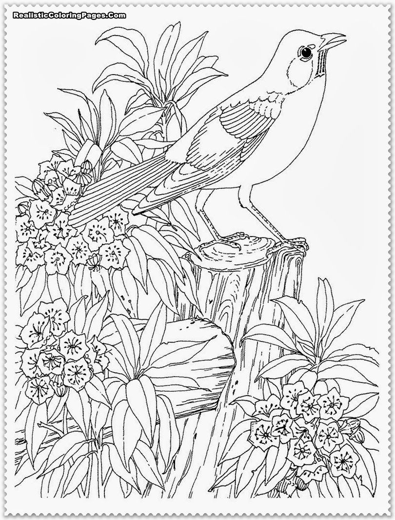 Bird Coloring Pages Realistic  Bird coloring pages, Garden