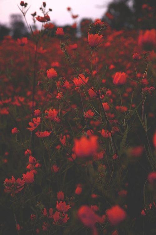 Flowers Via Tumblr Red Wallpaper Flower Hipster Phone