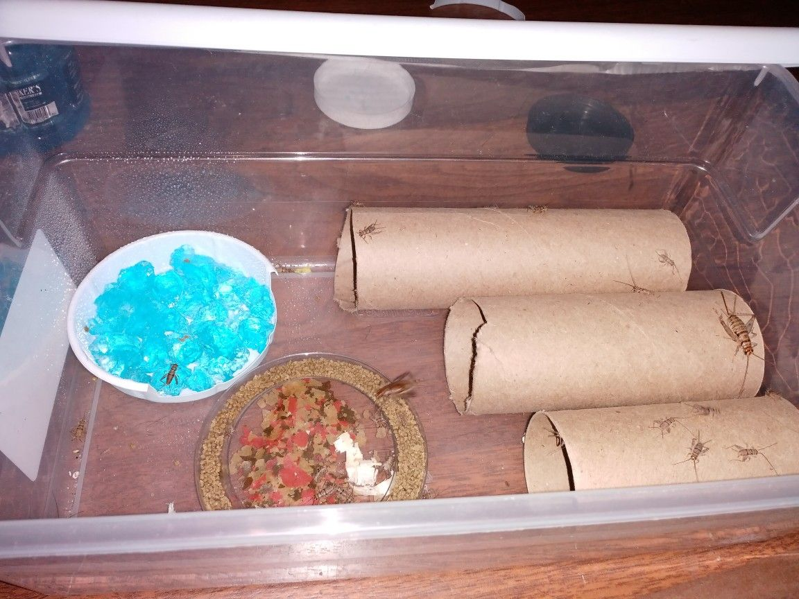 Cheap Homemade Cricket Keeper Leopard Gecko Homemade Good To Know