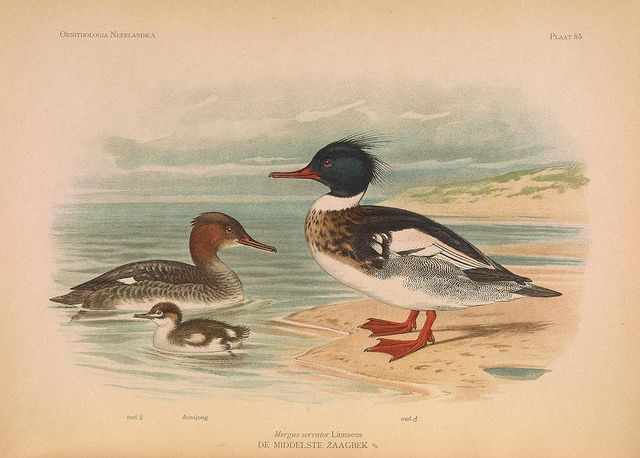n417_w1150 by BioDivLibrary, via Flickr