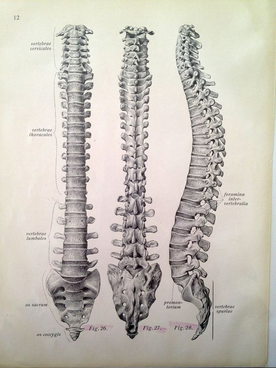 This Drawing Of The Spine Is Everything La Area Spine Surgeon In