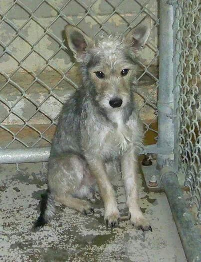 Urgent! Dies Tuesday! Abandoned by owner. At Malvern Animal Shelter. Arkansas. Call 501 276 2385.please share!!!!!!!!
