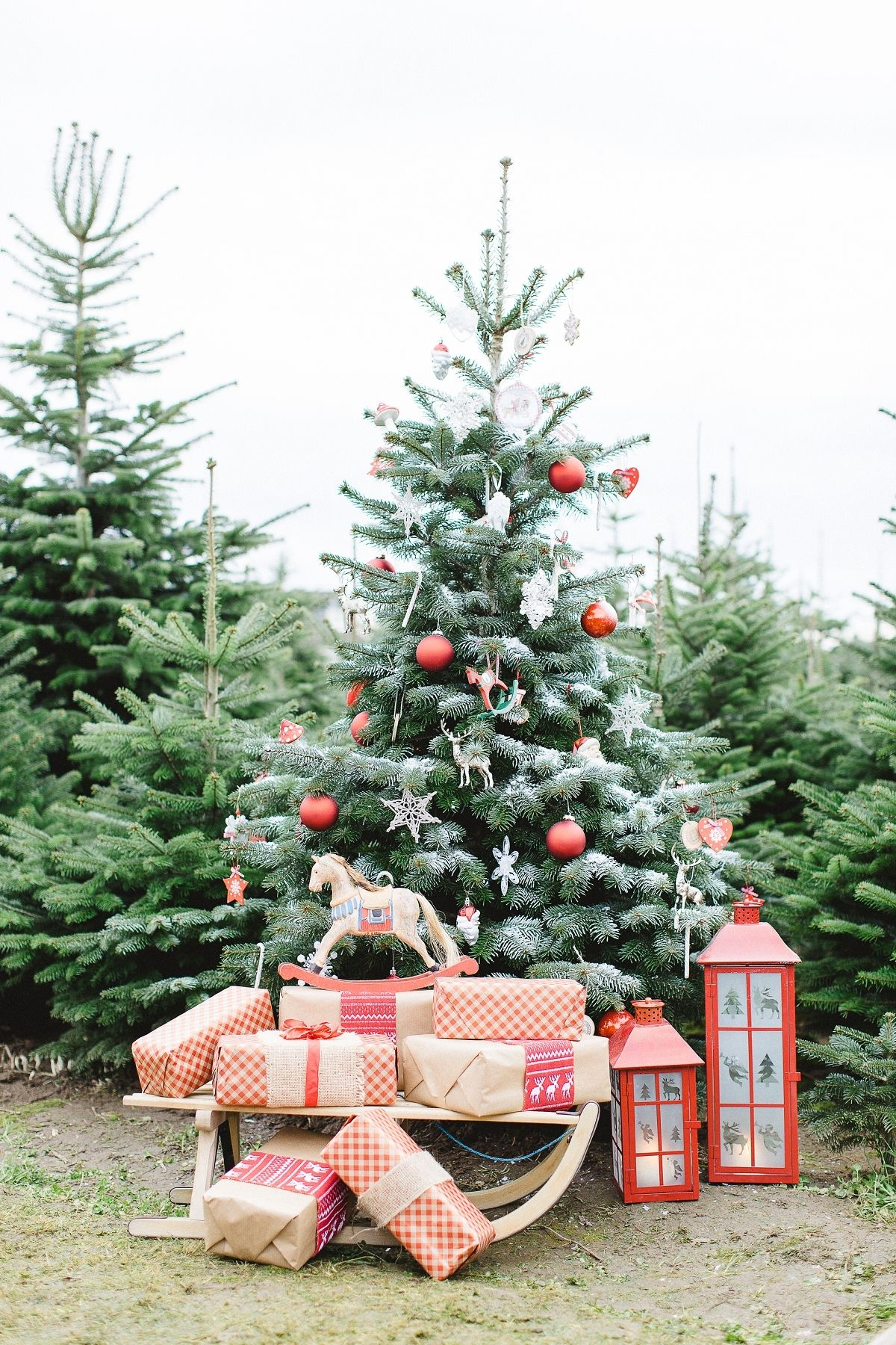 Festive Photo Shoot In Germany Outdoor Christmas Tree Outdoor Christmas Photos Photo Backdrop Christmas