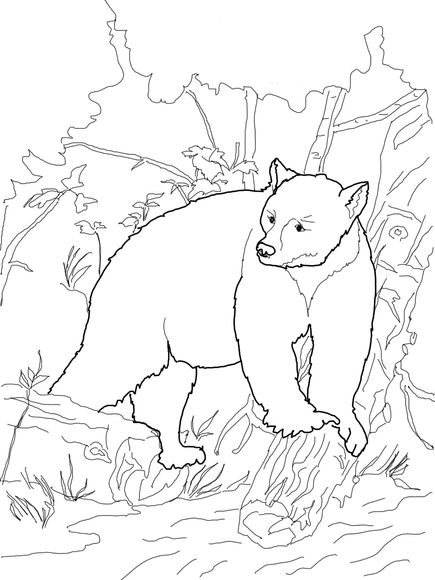 Kermode Bear Coloring Page Bear Coloring Pages Animal Coloring Pages Teddy Bear Coloring Pages