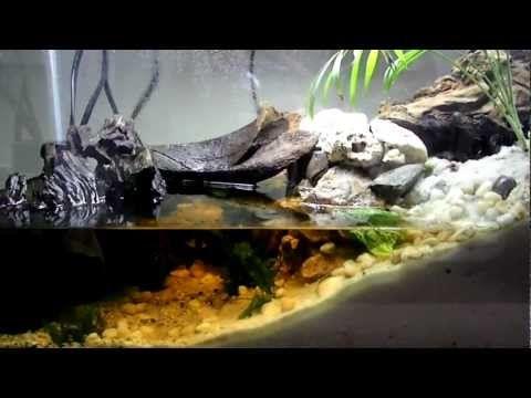Red Claw Crab Paludarium Drunktankaquaria S01 E06 Youtube Habitats Crab Claws