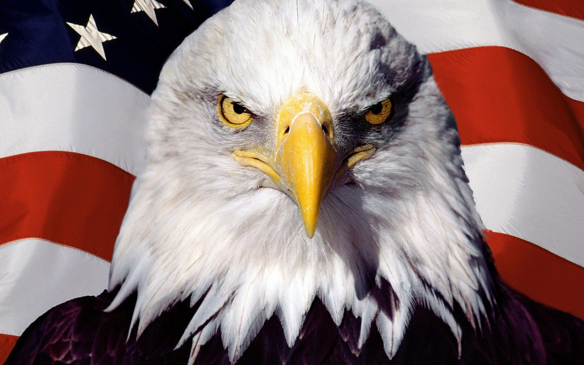 us flag and bald eagle | home » animals pictures » eagle wallpapers