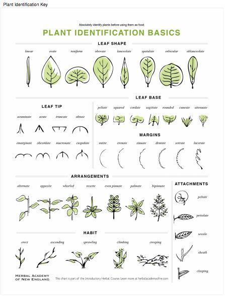 Online Introductory Herbal Course Lesson Preview Plant