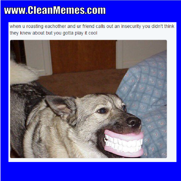 Idea by Clean Memes on Clean Memes Funny animal faces