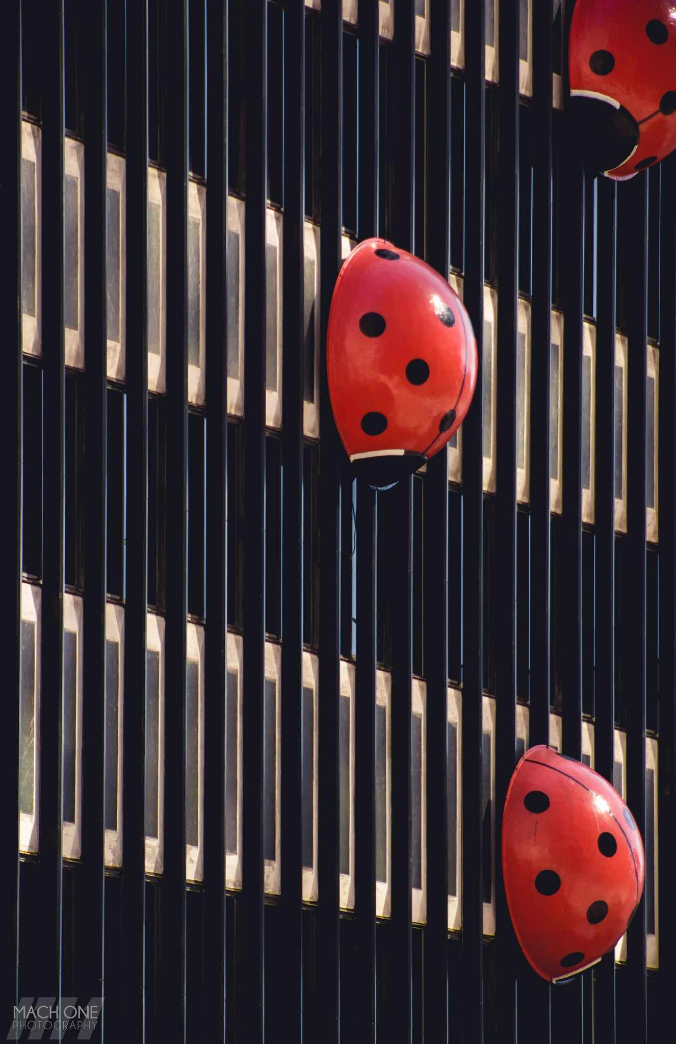 https://flic.kr/p/TJgdi9 | Lady Bugs | Lady bug scupltures resting calmly on the side of a building in downtown Milwaukee  FOLLOW ME ON YOUR FAVORITE SOCIAL MEDIA SITE.  Facebook, Google+, Instagram, Flickr, Tumblr, Pinterest.  Links on my website: machonephotography.myportfolio.com