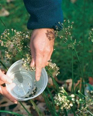 Collecting and storing seeds for your garden next year. FRUGAL and smart!