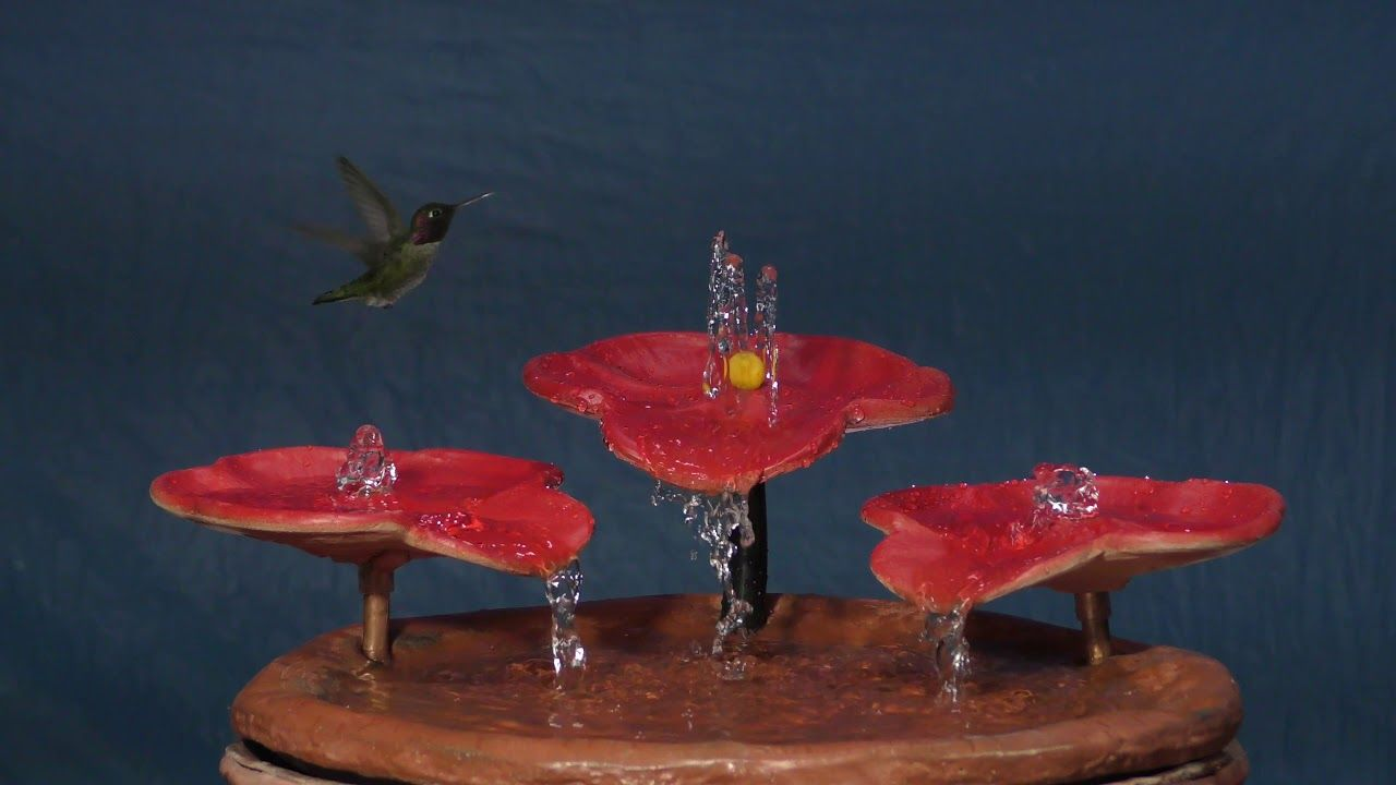 "Hummingbirds Bathing in the NEW ""Tabletop Hummingbird Bath"