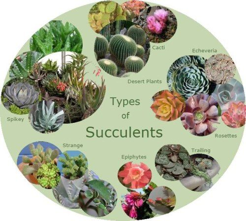 Types Of Succulents Chubby Spikey Textured Smooth