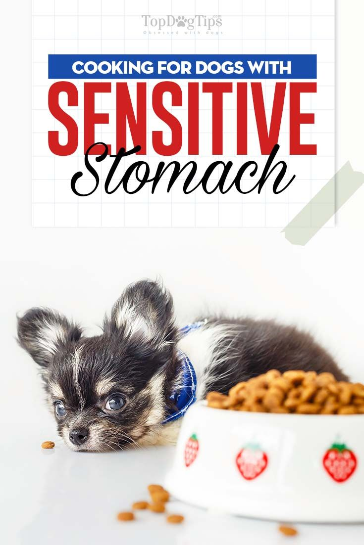 Dietary guidelines for dogs with sensitive stomachs dog
