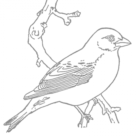 Robins Coloring Pages Coloring Rocks Animal Coloring Pages Bird Coloring Pages Coloring Pages