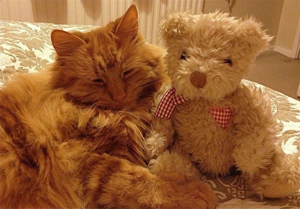 ourson et chat Cute animals, Cute cats