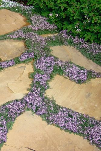 Photo of The Best Plants to Grow Between Stepping Stones & Pavers from Wilson Bros Garden…