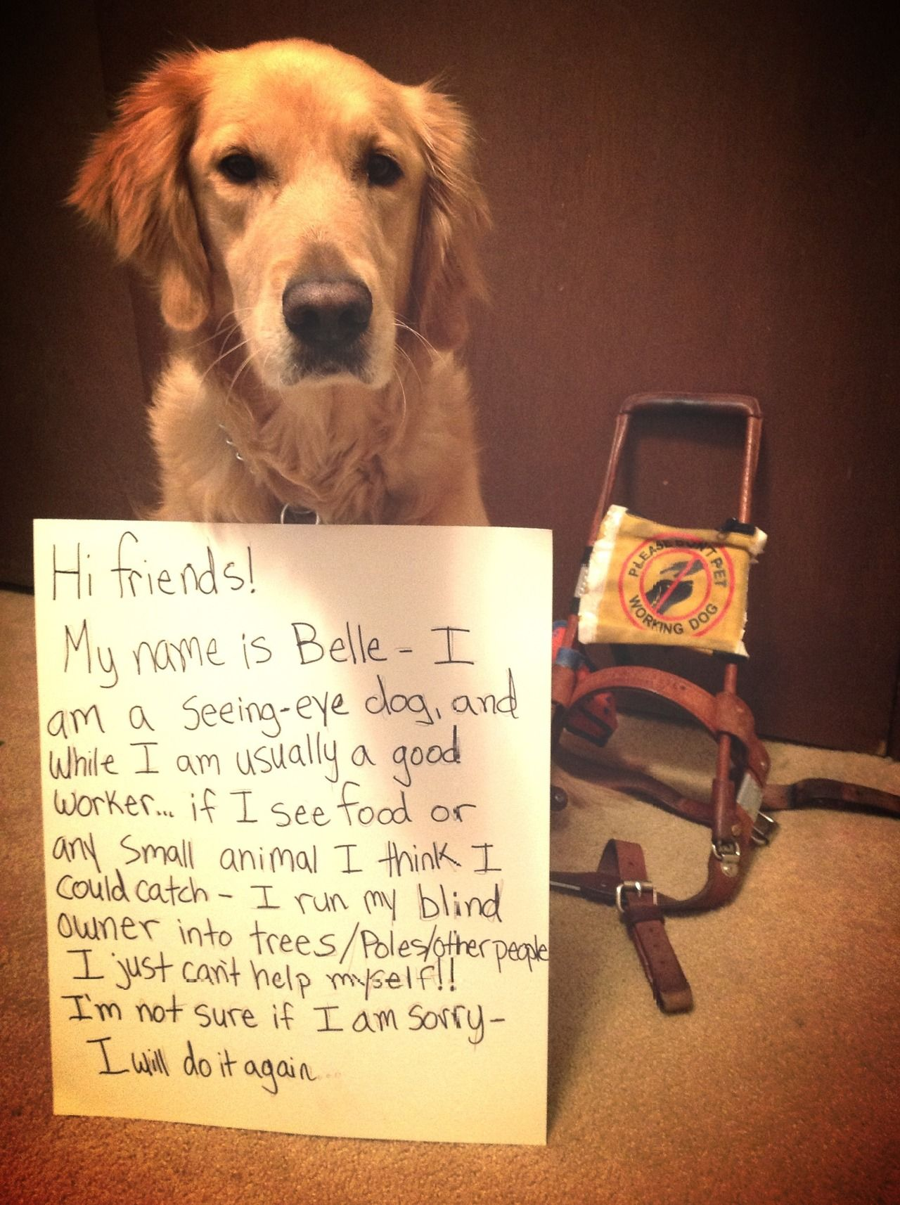 Hi friends! My name is Belle - I am a seeing-eye dog, and while…