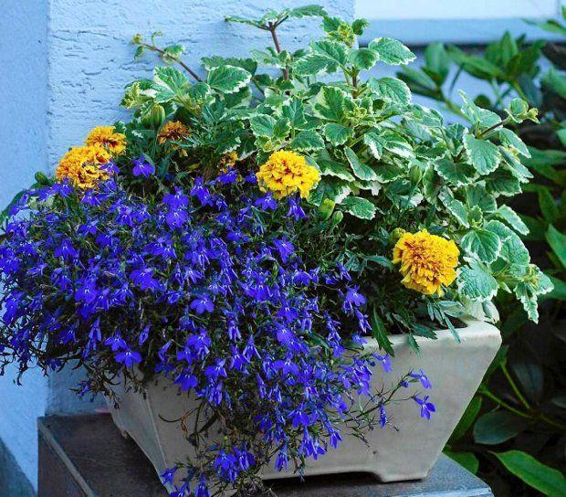 Fot Lilianna Sokolowska Garden Flower Plant Container Flowers Plants Container Gardening