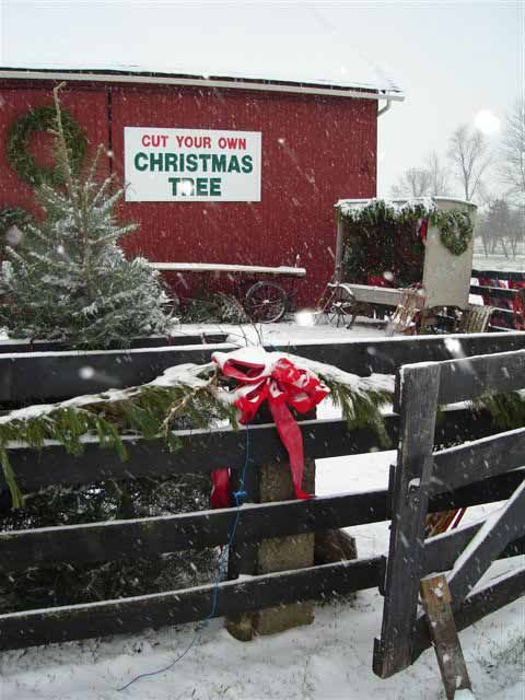 Country Pines Christmas Tree Farms Dayton Ohio Christmas Tree Farm Christmas Farm Christmas Tree Lots