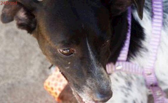 Greve de veterinários na rede municipal afeta cirurgias de castração de cães e gatos no Rio