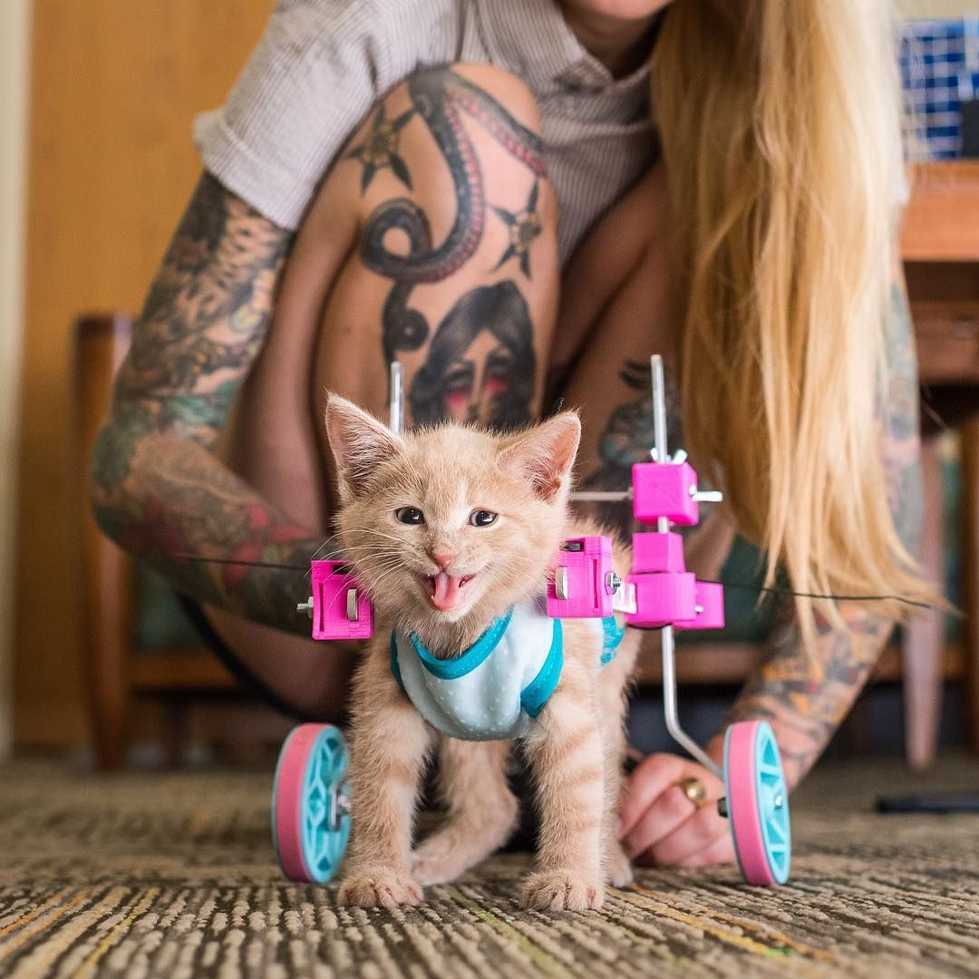 From Instagram Kittenxlady Iamthegreatwent Got This Beautiful Photo Of Chloe Trying Out Her Hot New Custom Wheels Today She I Cats Kitten Cats And Kittens