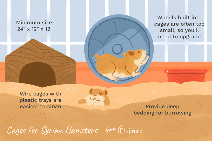The Right Cage Will Be A Happy Home For Your Syrian Hamster In 2020 Syrian Hamster Hamster Hamster Care