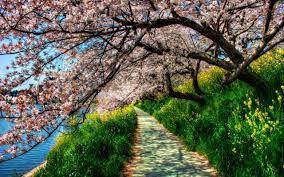 varicoză fotografie de primăvară)