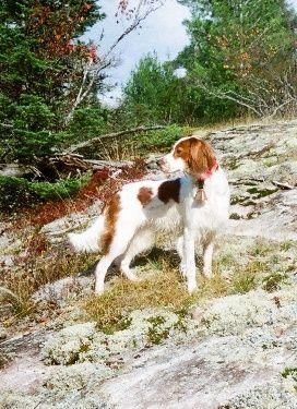 Fall fido fun! #gorgeous #dog in #nature #woof !