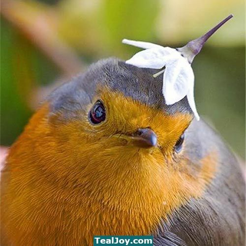 Silly Bird That 39 S Not A Hat Funny Animals Birds Cute Animals