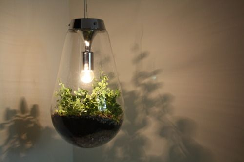 Terrarium Light Amazing Idea Via Miniscapes Indoor Garden