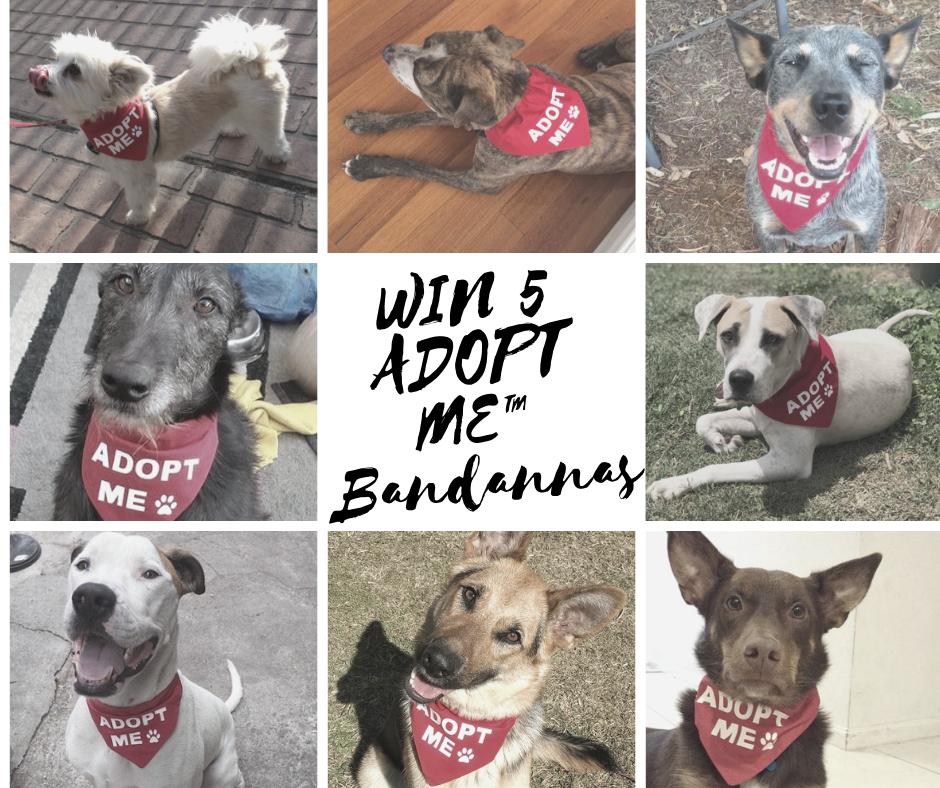 Win 5 Adopt Me Banadannas From Www Mycraftydog Com Au Just Go To Their Facebook Page Rescue Dogs Service Animal Bichon Frise Rescue
